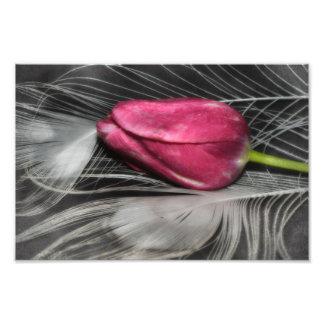 tulip photo print