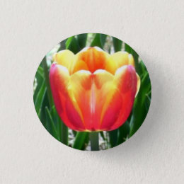 Tulip Pinback Button