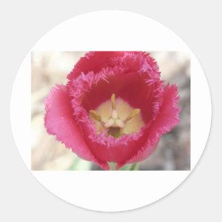 tulip,pink fringe tulip classic round sticker