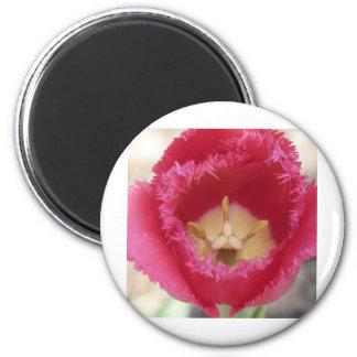 tulip,pink fringe tulip magnet