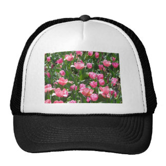 tulip,pink hats