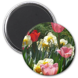 tulip,pink tulip and daffodil magnet