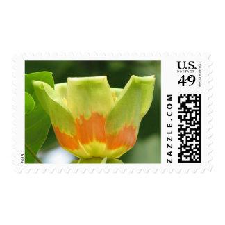Tulip Poplar Bloom Stamp