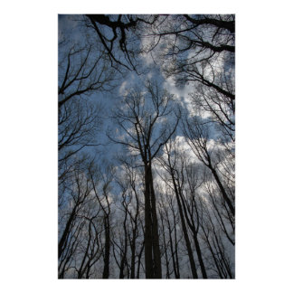 Tulip Poplar Trees Cloudy Blue Sky Poster