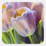 Tulip Portrait Restyle Square Sticker