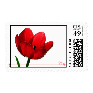Tulip Postage