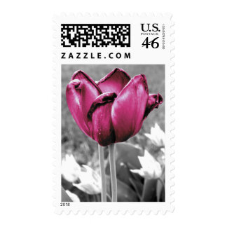 Tulip Postage Stamps