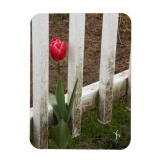 Tulip Rectangle Magnets