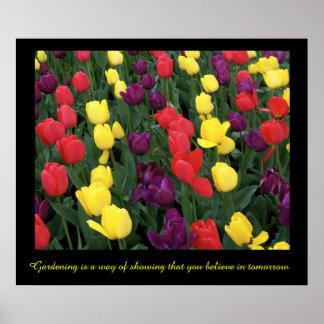 Tulip Rainbow Poster