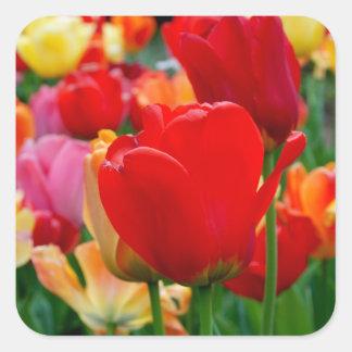 Tulip Rainbow Stickers