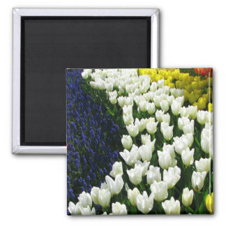 Tulip Rainbow Wave 2 Inch Square Magnet