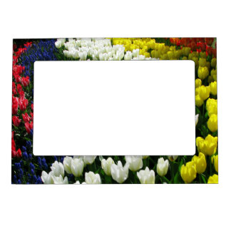 Tulip Rainbow Wave Magnetic Picture Frame