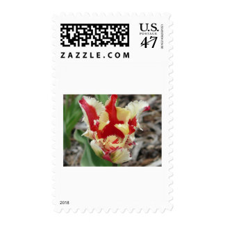 tulip,red and yellow fringe stamp