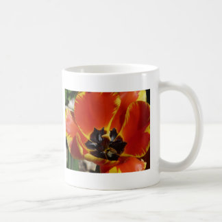 tulip,red and yellow mugs