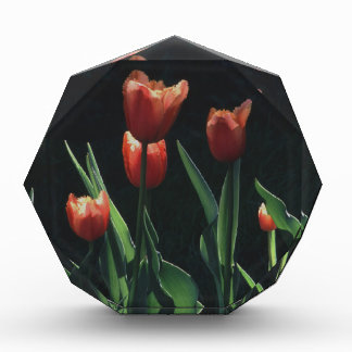 Tulip Red  Flare Award