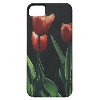 Tulip Red  Flare iPhone SE/5/5s Case