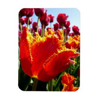 Tulip - Red Fringed Close-Up Rectangular Photo Magnet