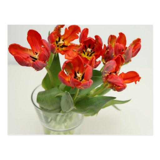 Tulip red postcard