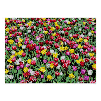 Tulip Riot -- Colorful Tulips Poster