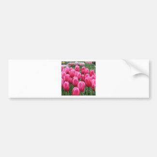 Tulip RSVP Bumper Stickers