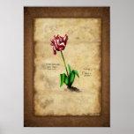 Tulip (Semper Augustus) Plaat