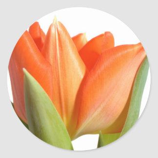 Tulip Stickers