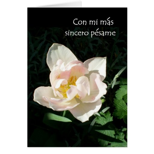 Tulip Sympathy Card Spanish Greeting Zazzle