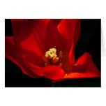 Tulip Synaeda Orange