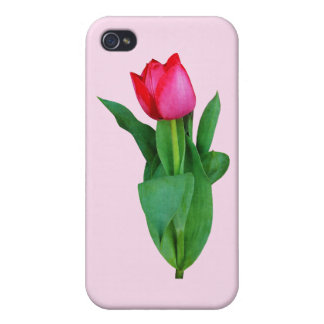 Tulip Takes a Bow iPhone 4/4S Covers