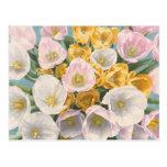 Tulip Tantrum postcard