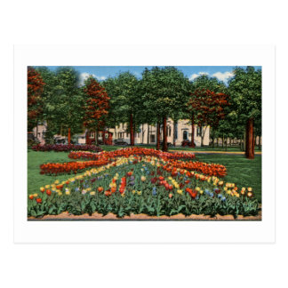 Tulip Time Holland, Michigan Postcard