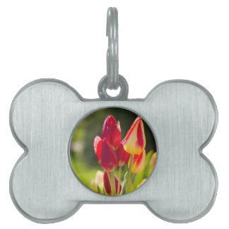 Tulip Tiptoe Time Pet Tag