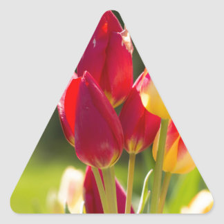 Tulip Tiptoe Time Triangle Sticker