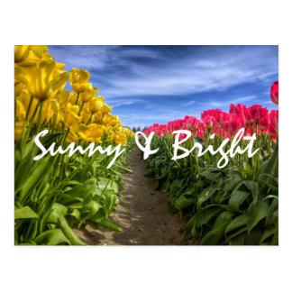Tulip Town Postcard