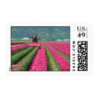 Tulip Tractor Stamp