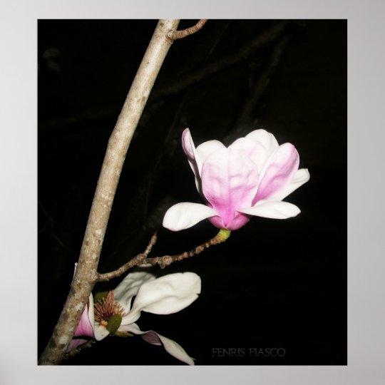 Tulip Tree Blossom Poster