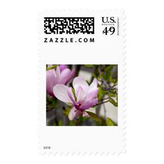 Tulip Tree Postage