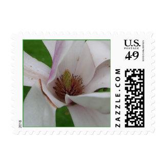 Tulip Tree Postage Stamps