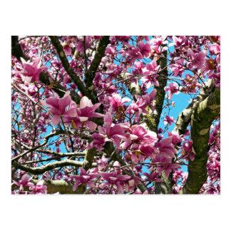Tulip Tree Postcard