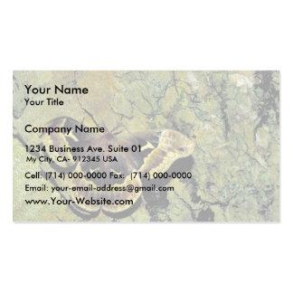 Tulip-tree silk moth business card