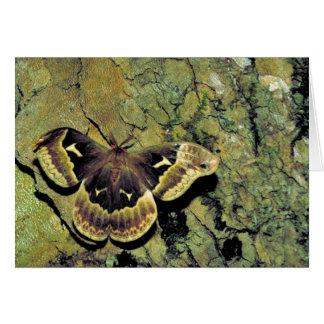 Tulip-tree silk moth card