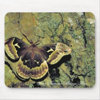 Tulip-tree silk moth mouse pad