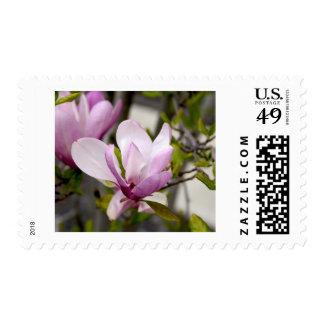 Tulip Tree Stamp