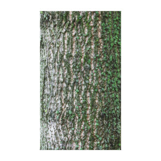 Tulip tree trunk gallery wrapped canvas
