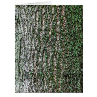 Tulip tree trunk cards