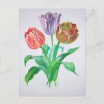 Tulip Trio Postcard