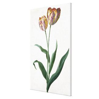 Tulip Tulip Canvas Print