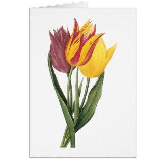 tulip(Tulipa gesneriana) by Redouté Greeting Card