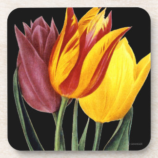 Tulip (Tulipa Gesneriana) Coaster