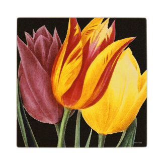 Tulip (Tulipa Gesneriana) Wooden Coaster